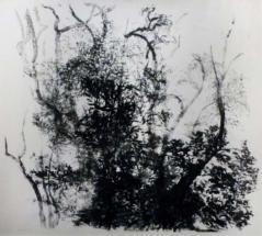 Kruijff_J-bomen_litho-1985