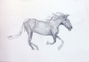 weide-robbert-paard